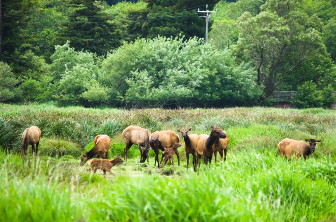 Elk Family Portrait