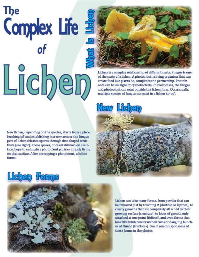 lichen Lichen is a complex relationship of different parts. Fungus is one of the parts of a lichen. A photobiont, a living organism that can create food like plants do, completes the partnership. Photobionts can be an algae or cyanobacteria. In most cases, the fungus and photobiont can exist outside the lichen form. Occasionally, multiple species of fungus can exist in a lichen 'co-op'.New lichen, depending on the species, starts from a piece breaking off and establishing in a new area or the fungus part of lichen releases spores through disc-shaped structures [see right]. These spores, once established on a surface, hope to entangle a photobiont partner already living on that surface. After entrapping a photobiont, a lichen forms!   Lichen can take many forms, from powder that can be removed just by touching it [dustose or leprose], to crusty growths that are completely attached to their growing surface [crustose], to lobes of growth only attached at one point [foliose], and even forms that look like miniature branched trees or dangling bunches of thread [fruticose]. See if you can spot some of these forms in the photos.